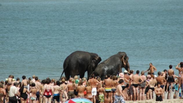 Olifanten aan Zee